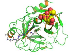 PSA KLK3 PDB 2ZCK Prostate Picture